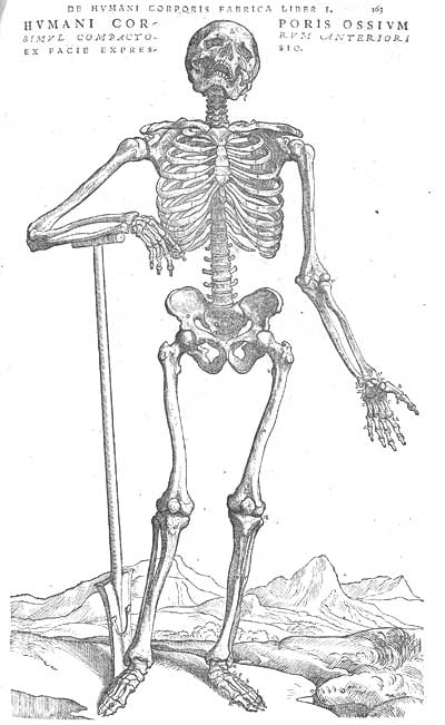 Image of the exposed skeleton of an online business